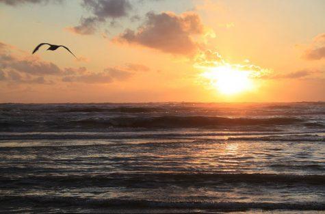 overspaern-makelaar-zandvoort-buurtinformatie