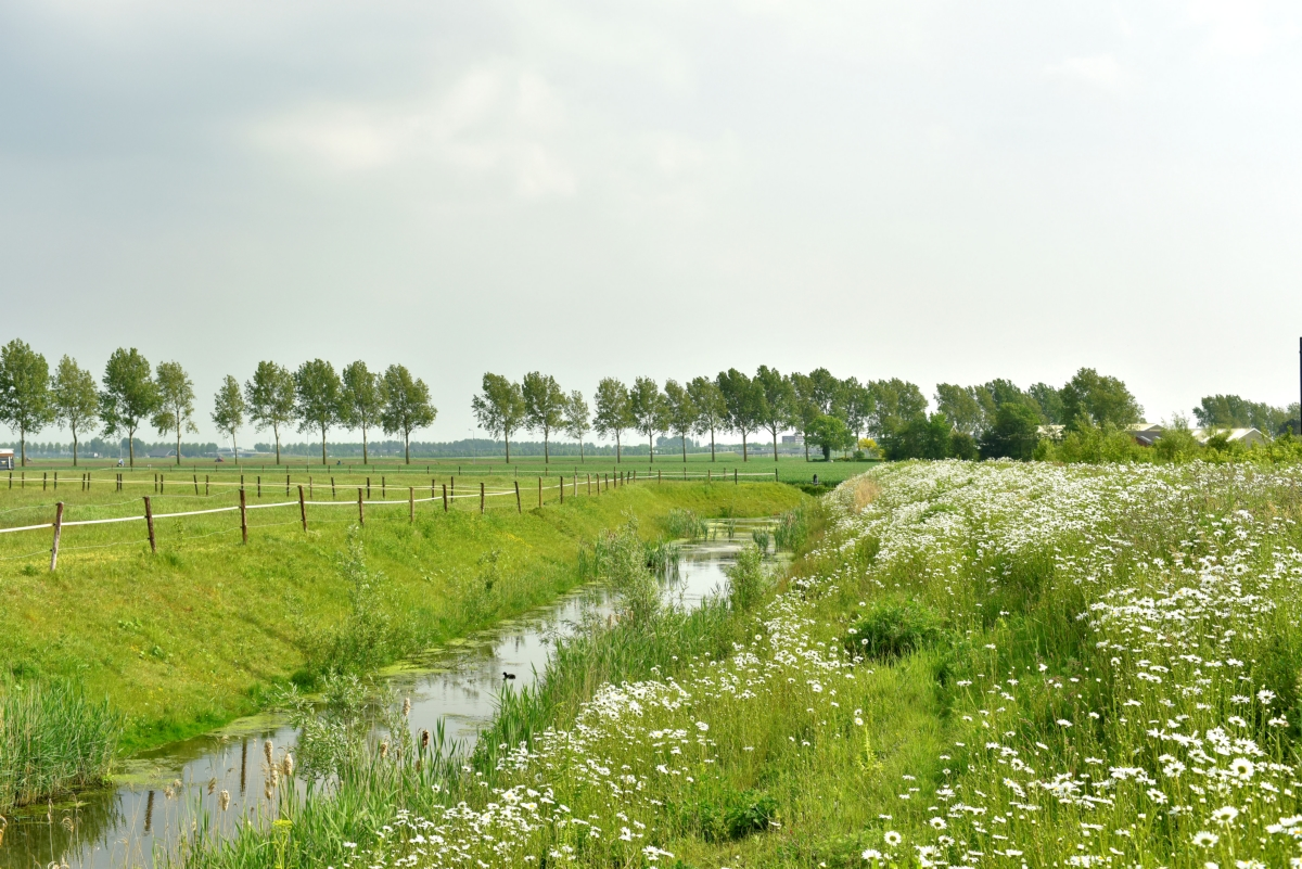 Nieuw-Vennep-park